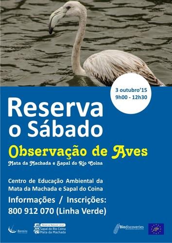 Observação de Aves 4.jpg