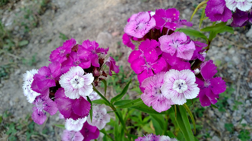 FloresPequenas.png