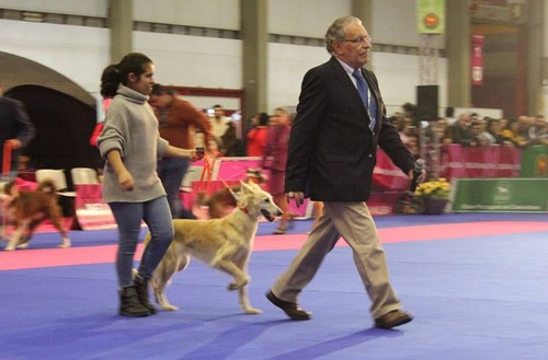 Cão do Barrocal Algarvio Exponor 23Jan2016.jpg