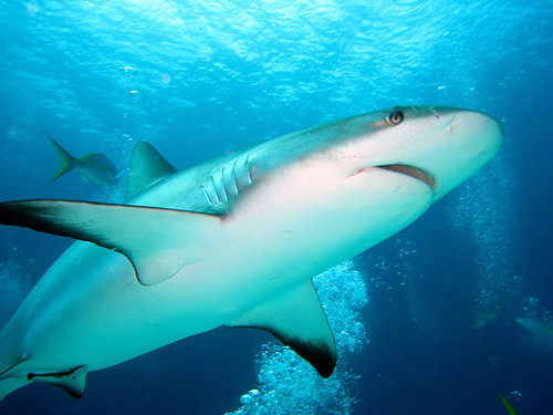 os-tubaroes.jpg