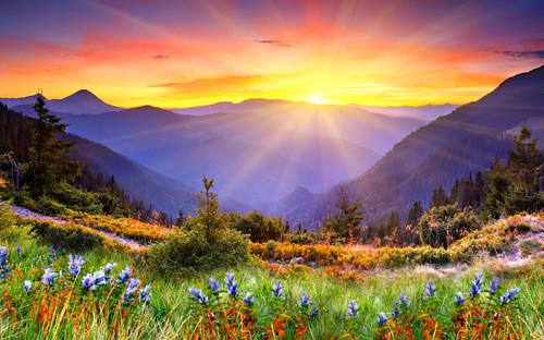 sol e flores.jpg