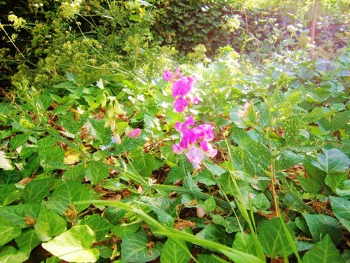 Flores - barranco IMG_0546.JPG