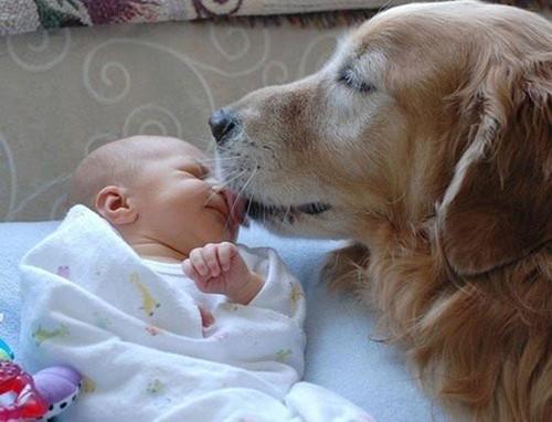 baby_dog-full.jpg