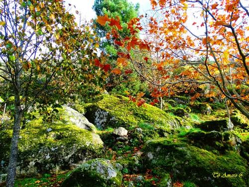 Fotos de Outono !!! 066.jpg