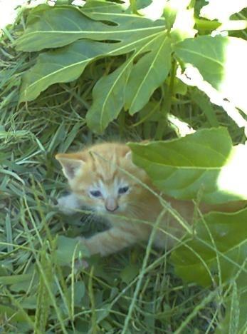 gatos-em-quintal-materno_VC-Agosto 2013_4.jpg