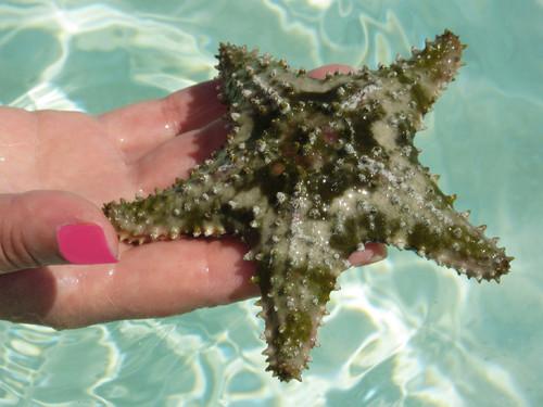 Estrela do mar_2.JPG