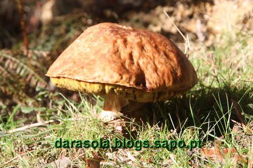 Trebilhadouro_09.JPG