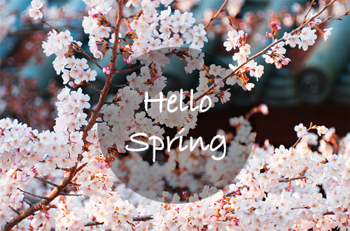 hello-spring.png