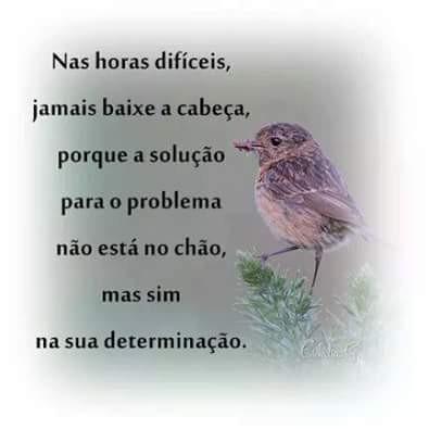 FB_IMG_1464729943912.jpg