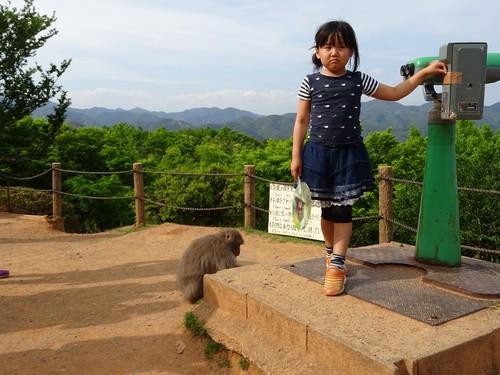 floresta bamboo kyoto.JPG