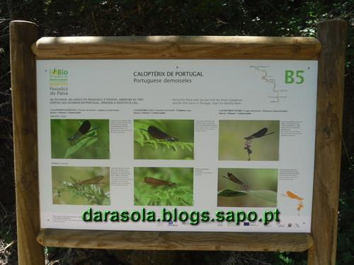 Passadicos_paiva_038.JPG
