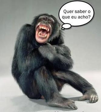macaco esperto.jpg