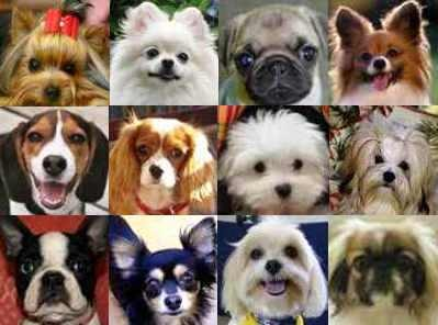 popular-small-dog-breeds.jpg