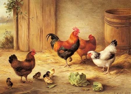 chickens-in-a-barnyard.jpg