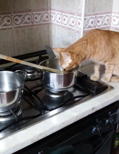 gato-cozinheiro.jpg