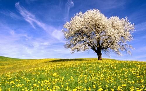 primavera iniciou hoje, domingo, às 17_44, com ch