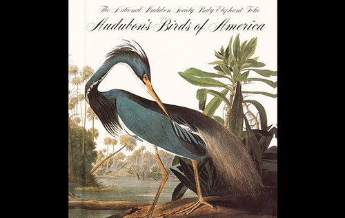 7-Birds-of-America-John-James-Audubon-div-690x437