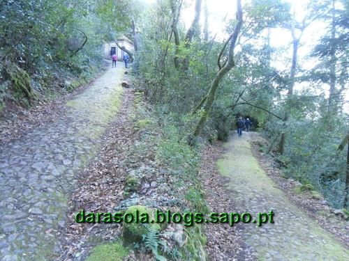 Mata_Bucaco_18.JPG