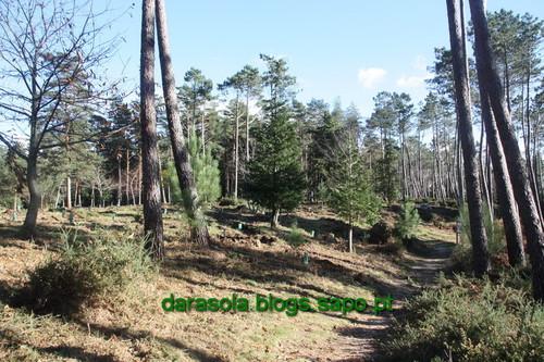 Biodiversidade_Freita_03.JPG