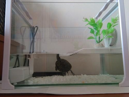 Tita_nv_aquario1