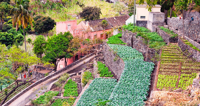 farm_santo_antao_cape_verde_690.jpg