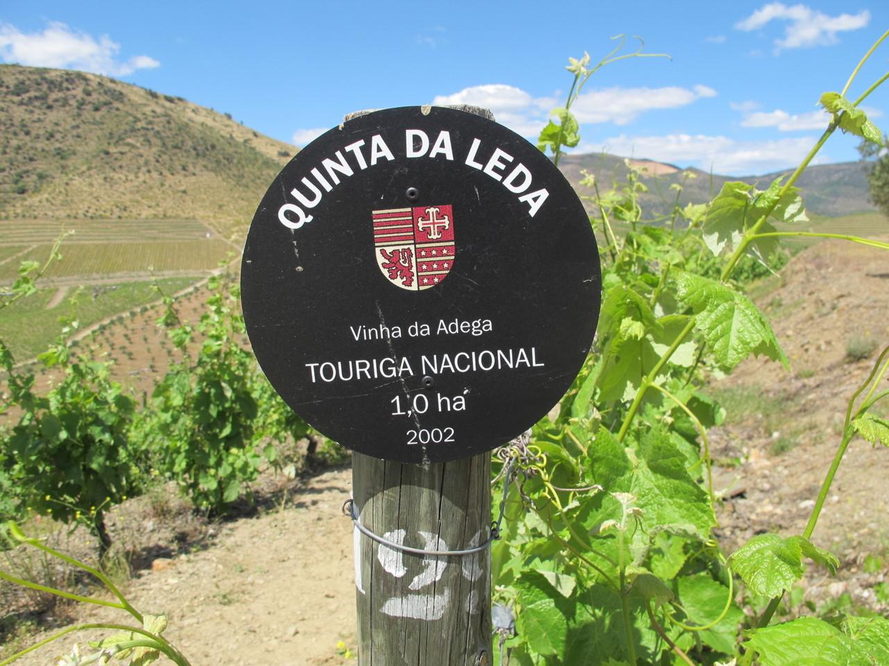 Quinta da Leda, Vinha da Adega