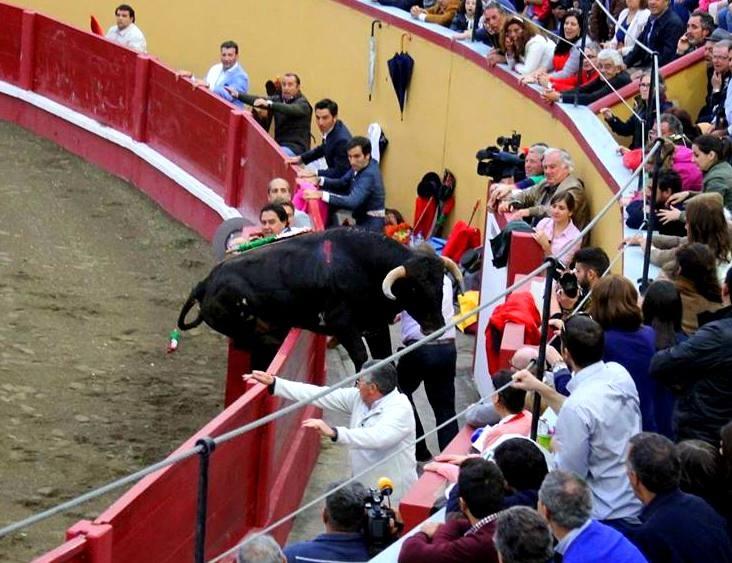 Toiro salta Trincheira RNogueira.jpg