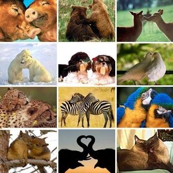 amor_animal2.jpg