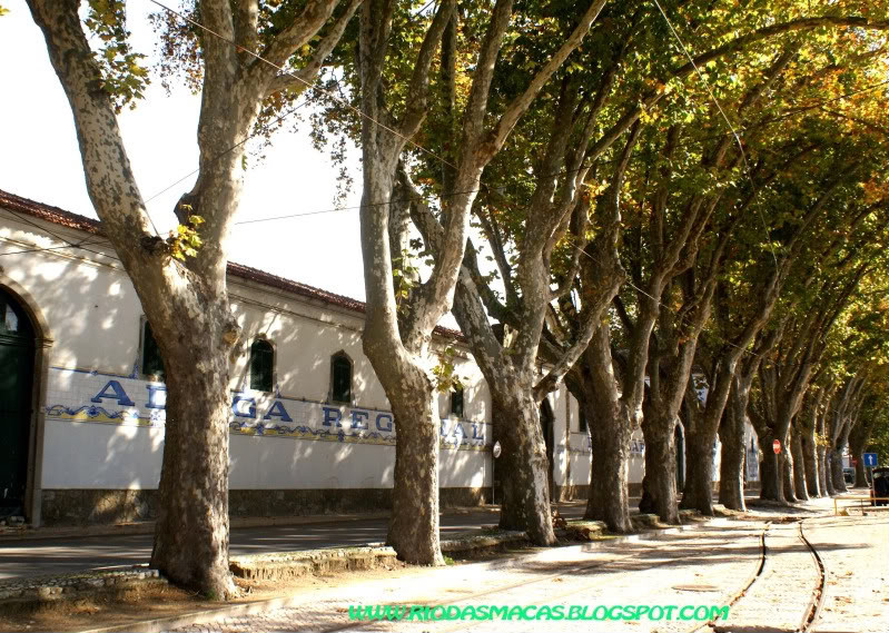 PlatanosColares20095blog.jpg