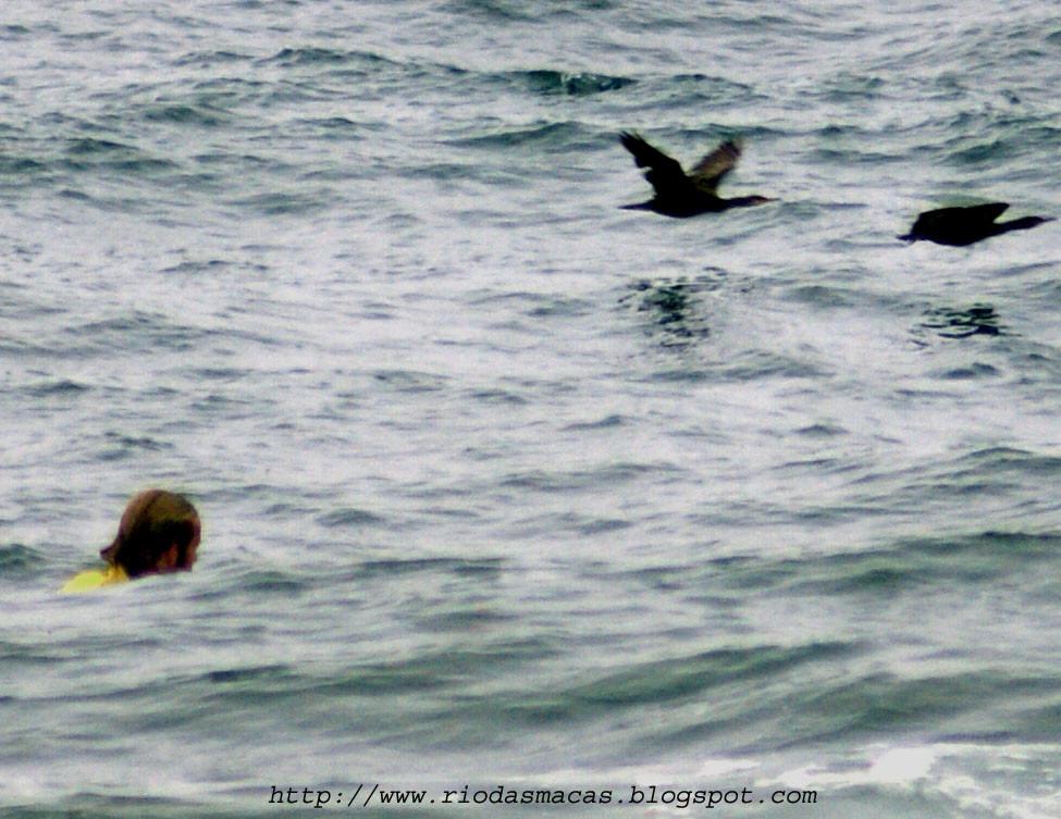 SURF10072015HIPblog.jpg