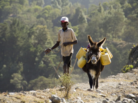 r-h-productions-donkey-carrying-water-santo-antao-