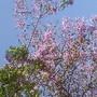 Foto original de D.A.P.L. Primavera 2105.jpg