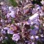 Flor de um chá