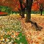 outono1a