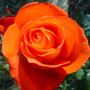 FloresIEBA_(28).JPG
