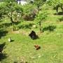 galinhas-campo.jpg