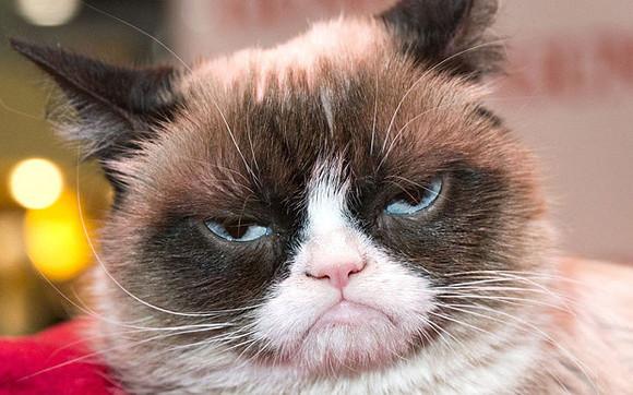 Grumpy_Cat__3481823b[1].jpg