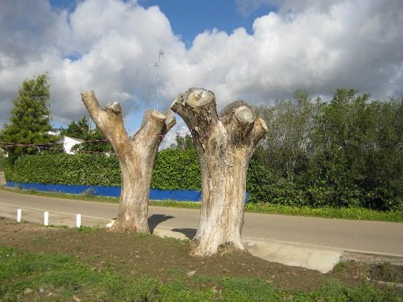 árvores mortas.jpg