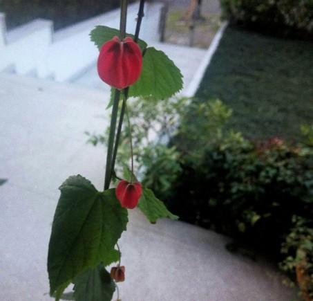 flor lanterna chinesa