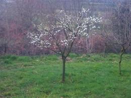 árvore de fruto em fevereiro