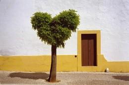 Árvore, Vila Viçosa