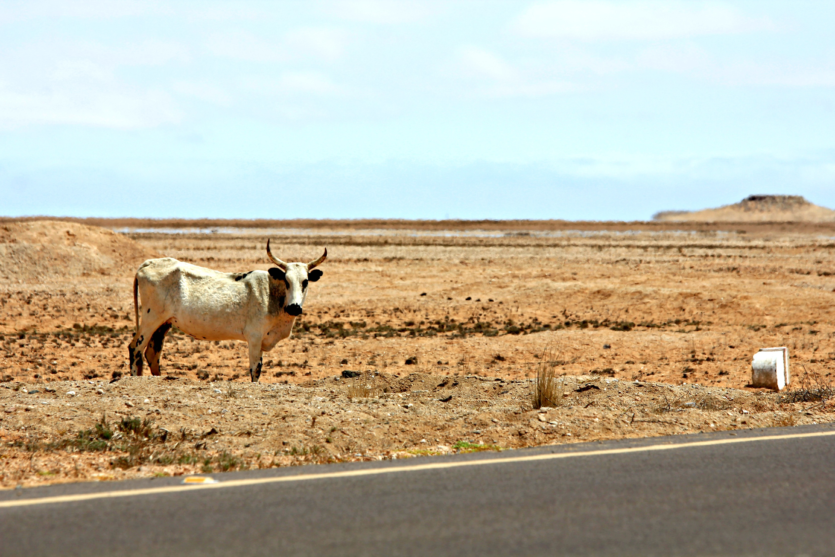 À descoberta do Namibe
