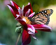 flores e borboletas[1].jpg