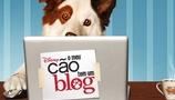 O Meu Cão Tem Um Blog