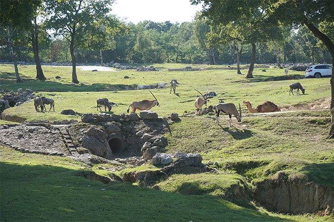 safari park_pombia
