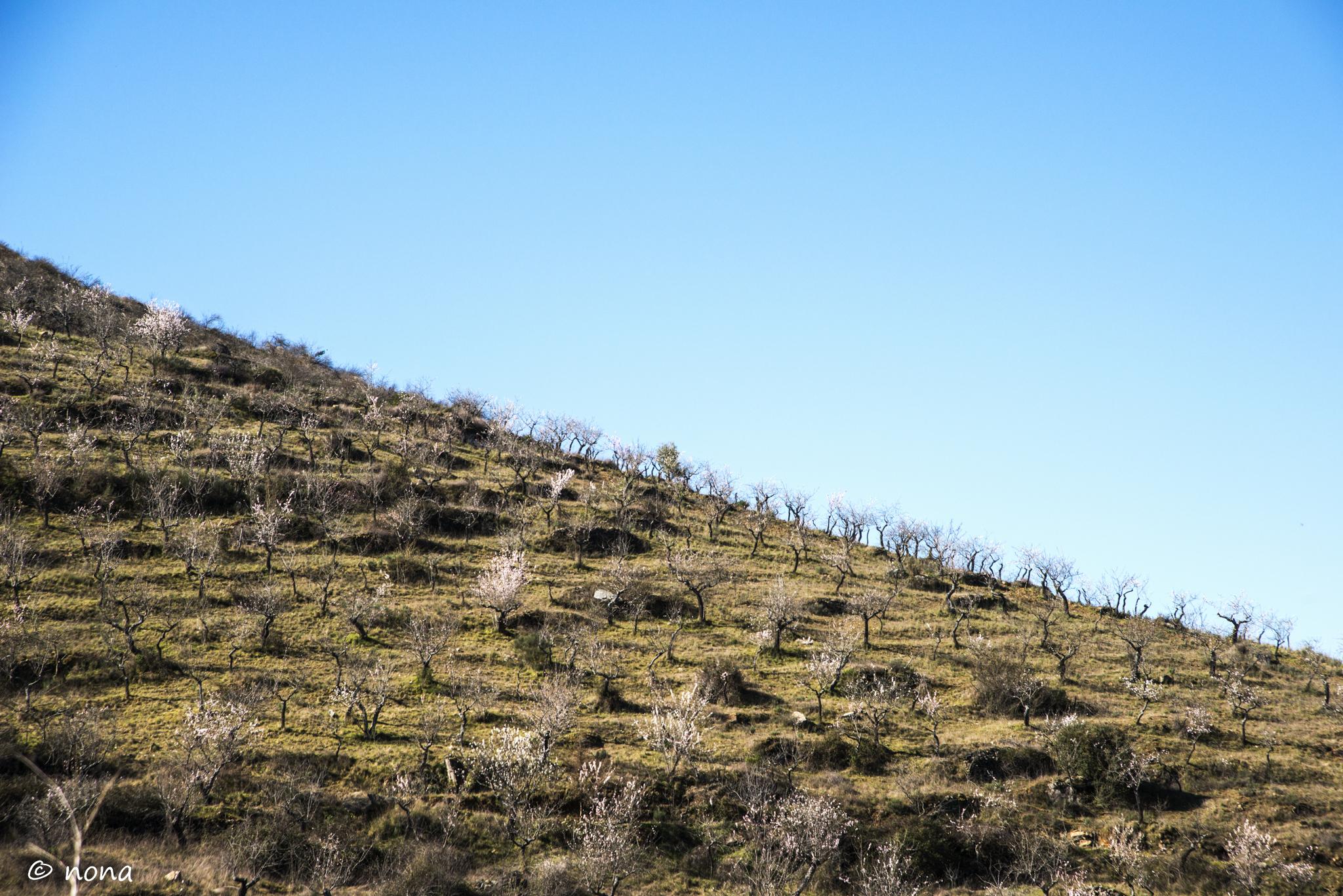 2015 - Rota das Amendoeiras (136).jpg