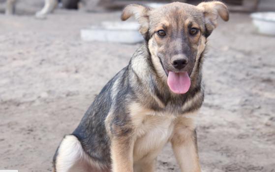 Cão sem dono.jpg
