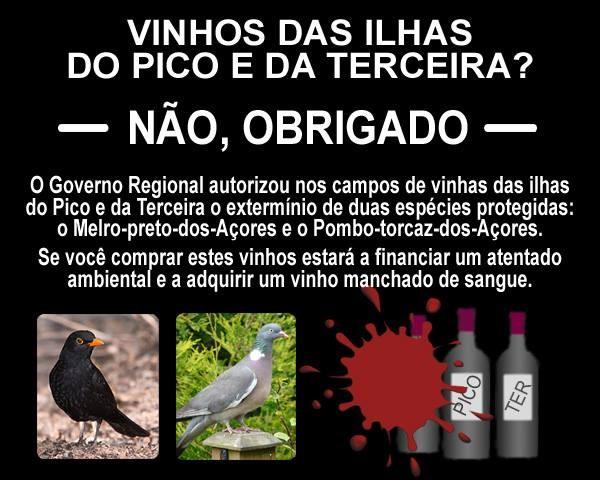 VINHOS DOS AÇORES.jpg